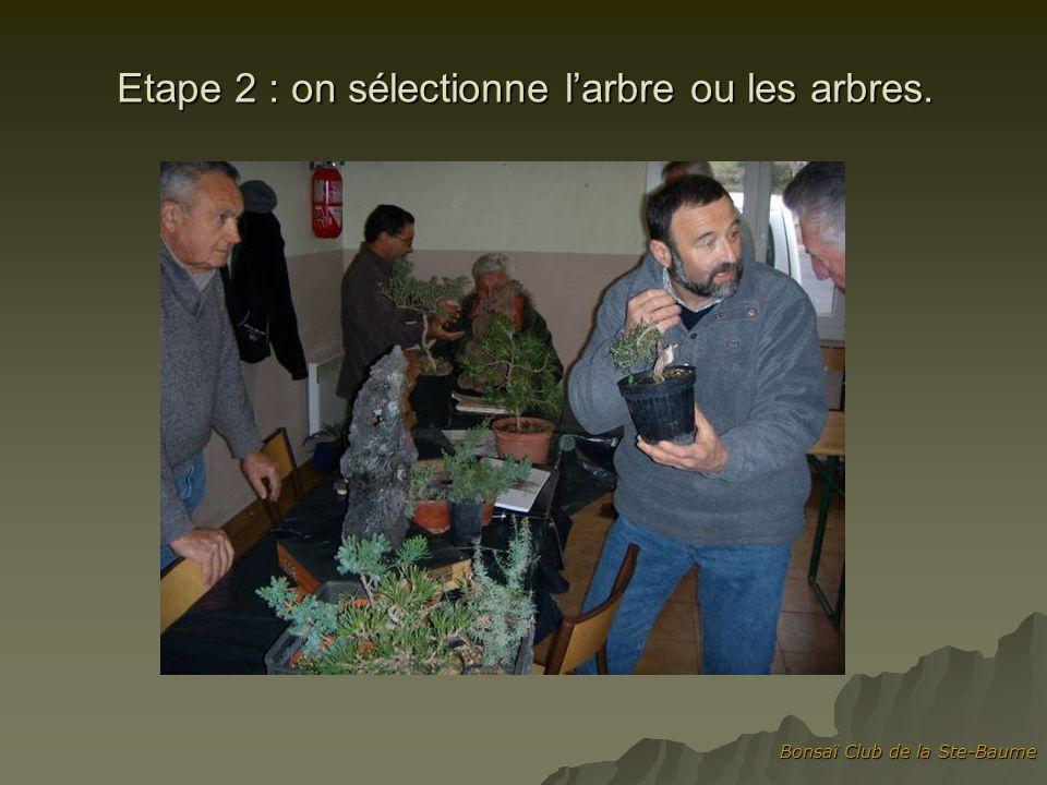 Bonsaï Club de la Ste-Baume Etape 3 : Bruno positionne larbre
