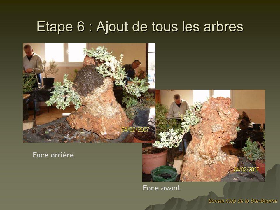 Bonsaï Club de la Ste-Baume Etape 6 : Ajout de tous les arbres Face arrière Face avant
