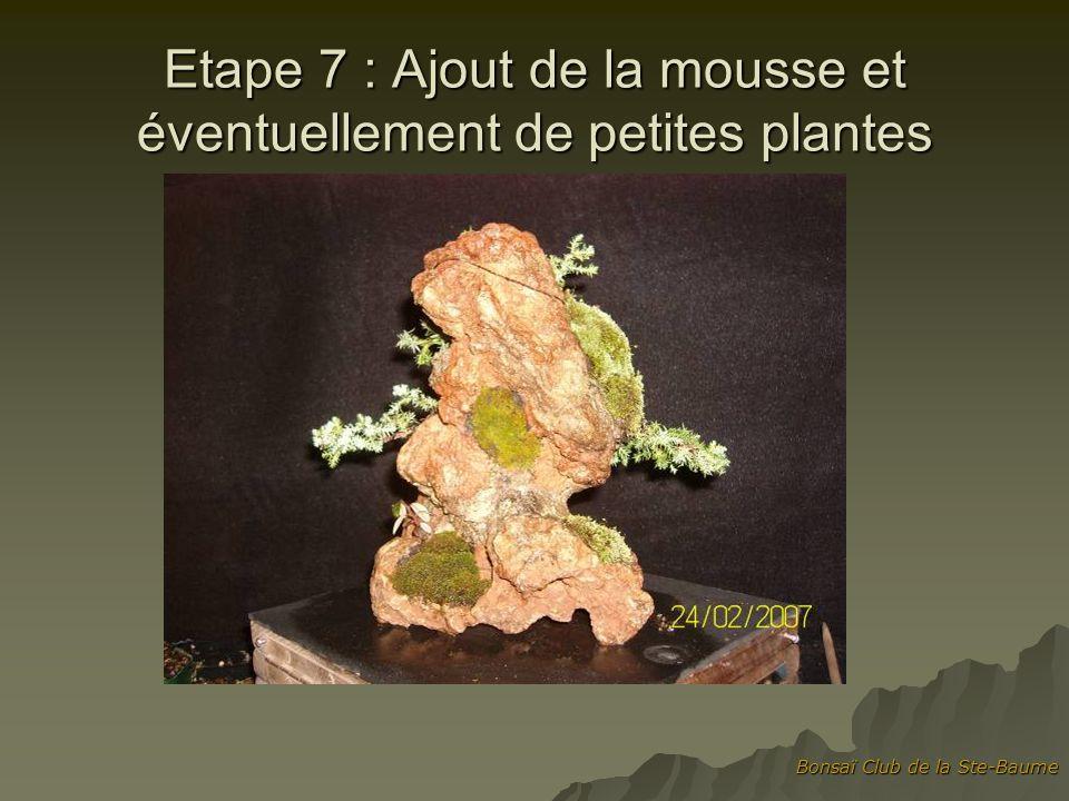 Bonsaï Club de la Ste-Baume Etape 7 : Ajout de la mousse et éventuellement de petites plantes