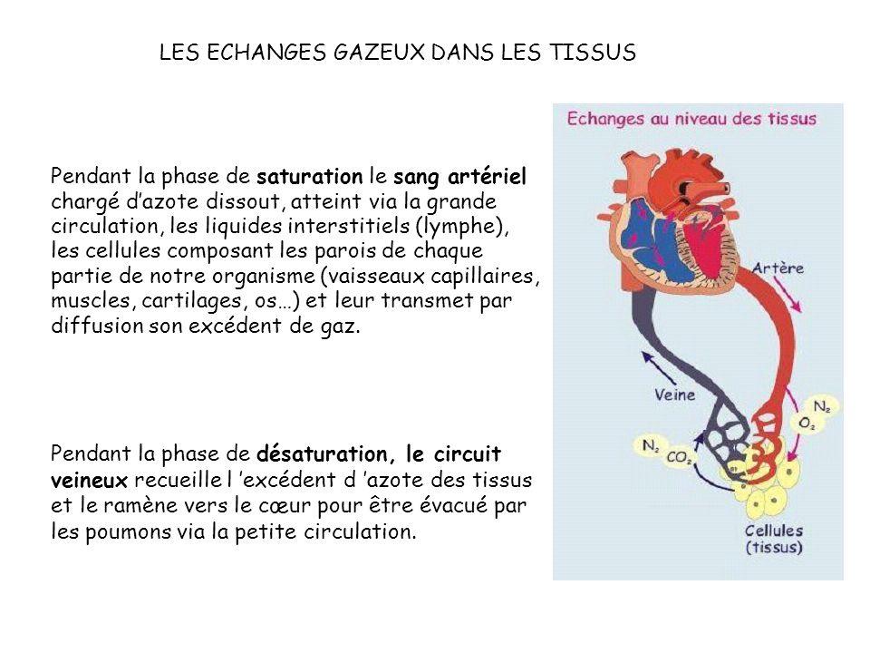 Pendant la phase de saturation le sang artériel chargé dazote dissout, atteint via la grande circulation, les liquides interstitiels (lymphe), les cellules composant les parois de chaque partie de notre organisme (vaisseaux capillaires, muscles, cartilages, os…) et leur transmet par diffusion son excédent de gaz.