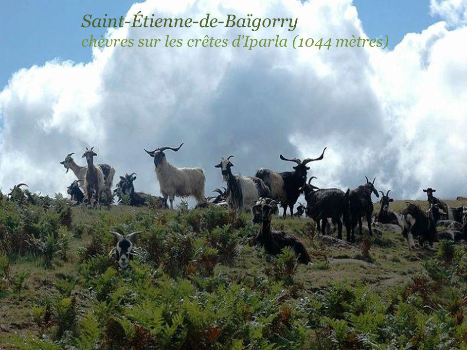 Saint-Étienne-de-Baïgorry vignoble dIrouléguy