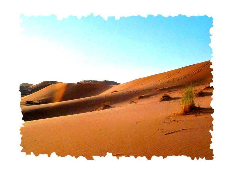 Un cri dans le désert sest fait entendre, Mais personne ne la entendu.