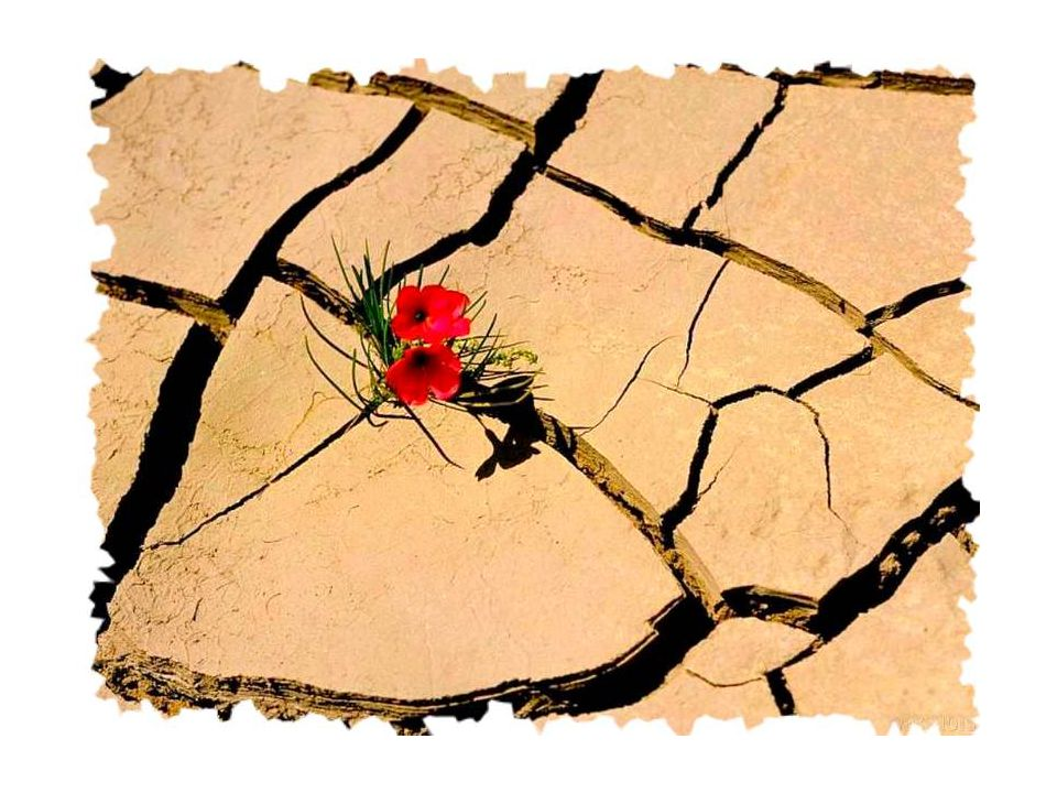 Résurrection. Présence abandon, présence confiance, présence dans lêtre, lêtre dans la vie, lêtre de la vie.