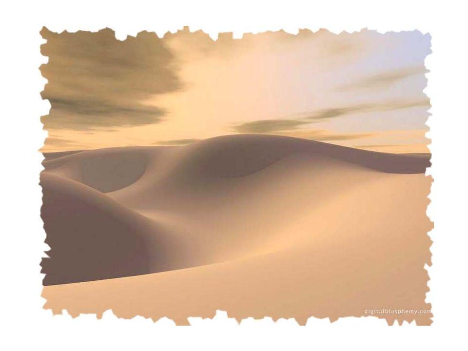 Un cri dans le désert sest fait entendre. Personne ne la entendu. Enfin, ceux qui refusent dentendre… Un cri, que seuls, ceux qui crient, ont entendu.