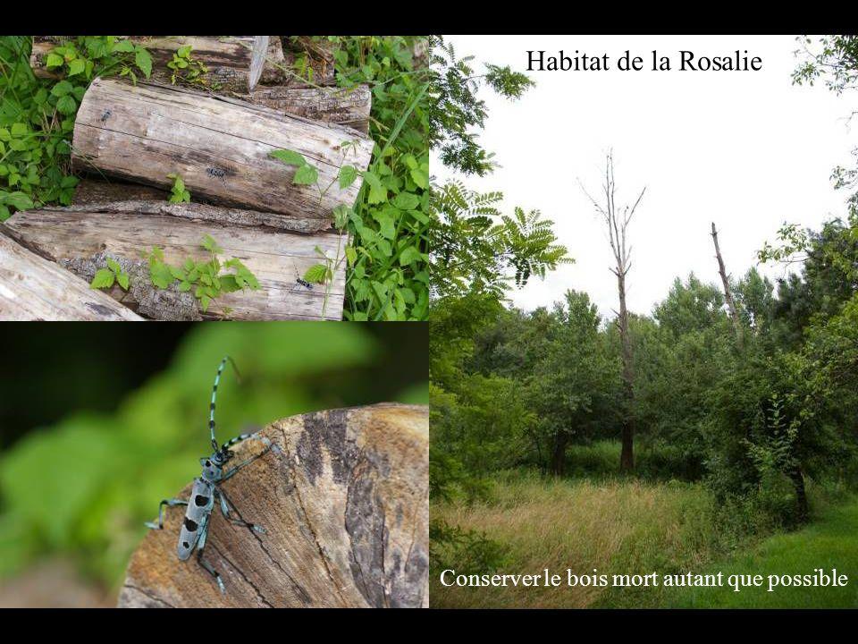 Le Vison dEurope Mustela lutreola Espèce protégée