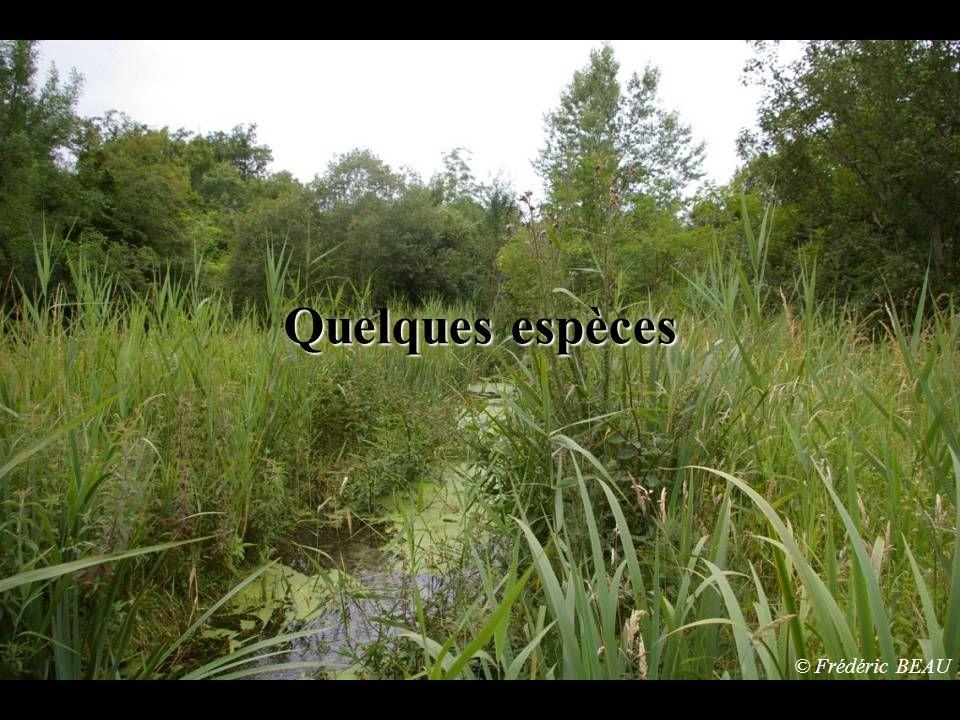 Ce site accueille de nombreuses espèces que nous devons préserver.