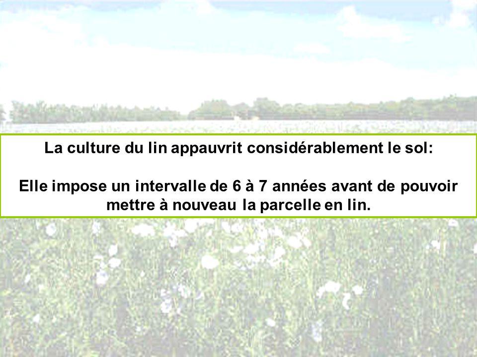 La culture du lin appauvrit considérablement le sol: Elle impose un intervalle de 6 à 7 années avant de pouvoir mettre à nouveau la parcelle en lin.