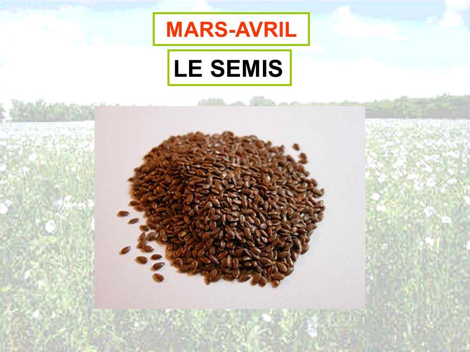 MARS-AVRIL LE SEMIS