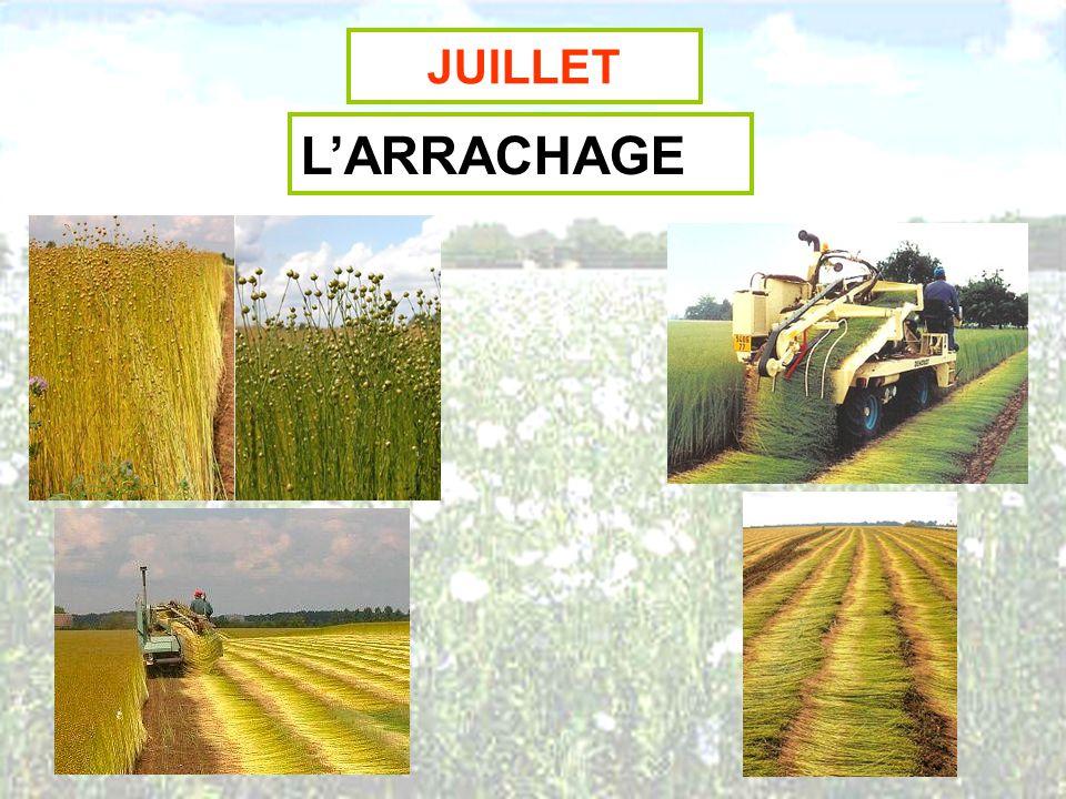 JUILLET-AOUT LE ROUISSAGE 13 Juillet29 Juillet4 Août