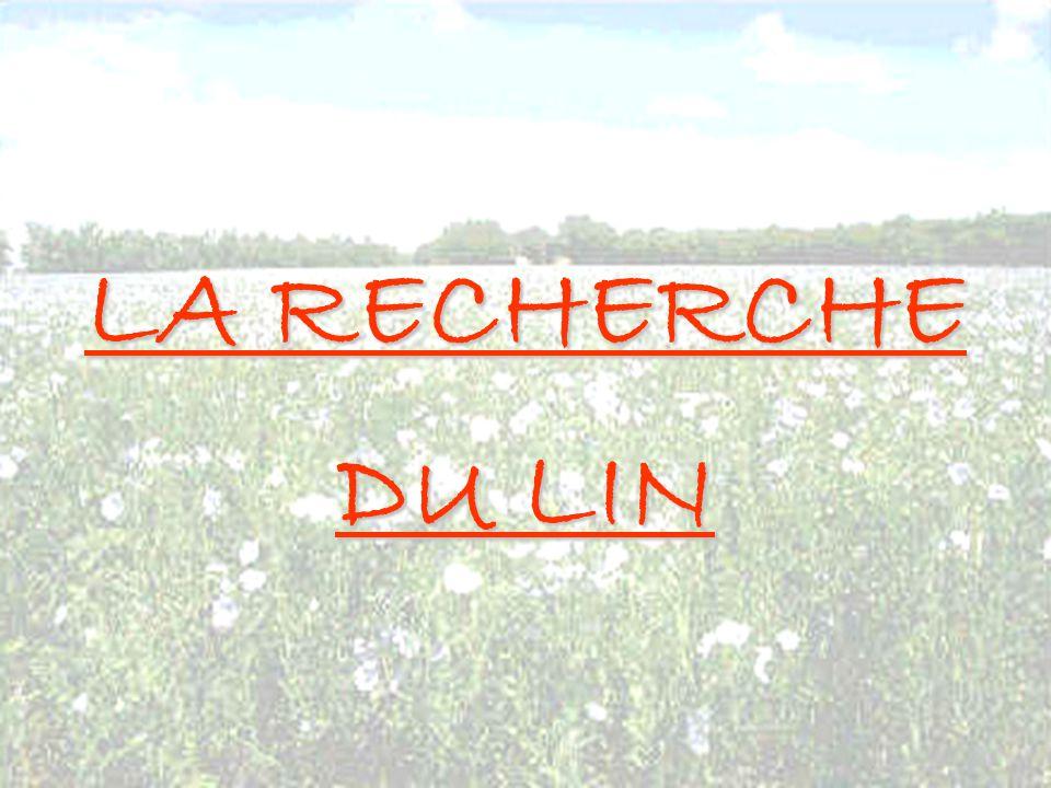 LA RECHERCHE DU LIN