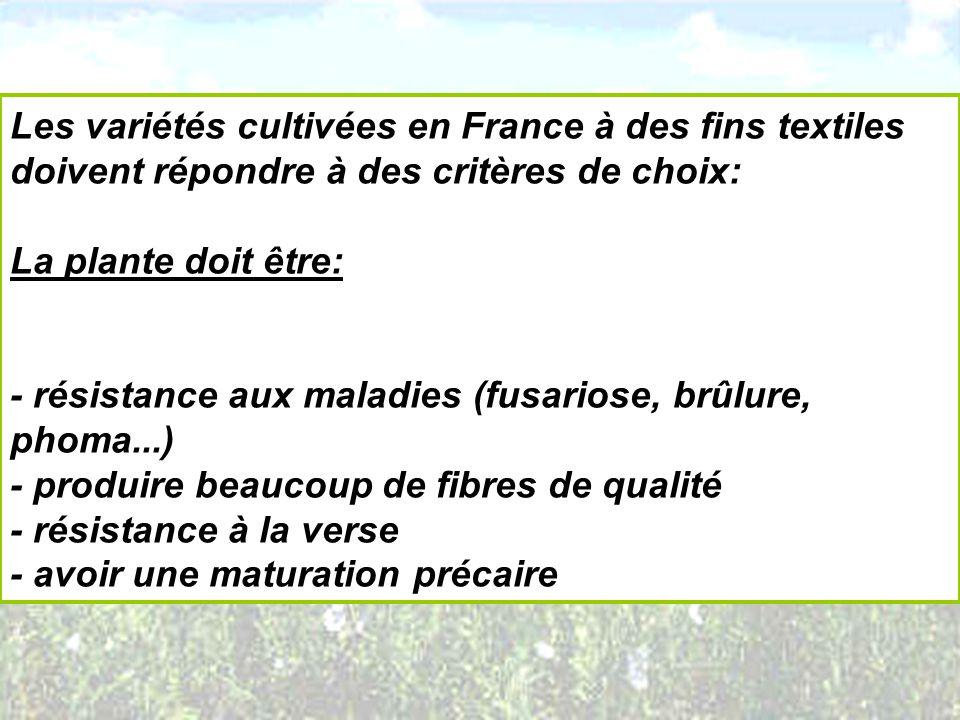 Les variétés cultivées en France à des fins textiles doivent répondre à des critères de choix: La plante doit être: - résistance aux maladies (fusario