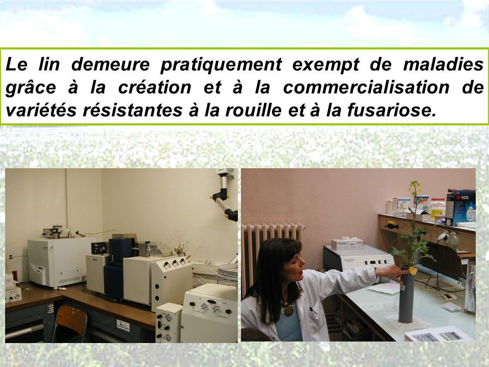 Le lin demeure pratiquement exempt de maladies grâce à la création et à la commercialisation de variétés résistantes à la rouille et à la fusariose.