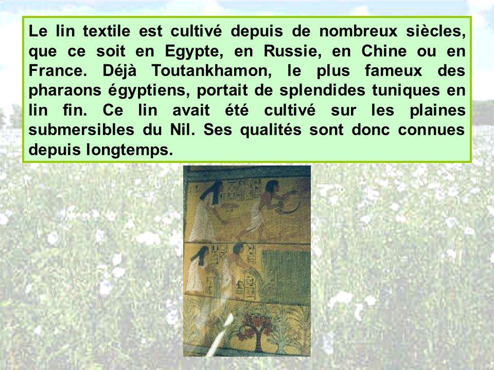 Le lin textile est cultivé depuis de nombreux siècles, que ce soit en Egypte, en Russie, en Chine ou en France. Déjà Toutankhamon, le plus fameux des