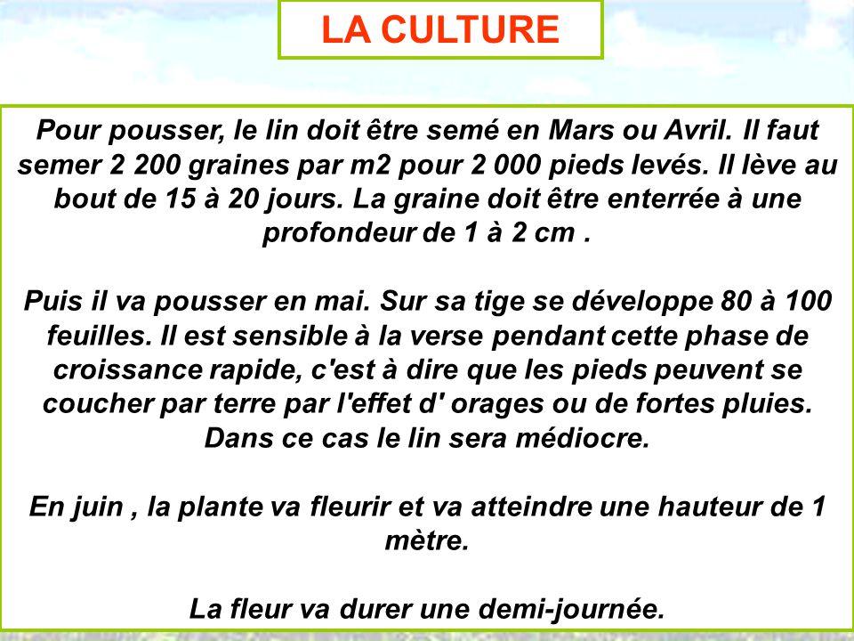 LA CULTURE Pour pousser, le lin doit être semé en Mars ou Avril. Il faut semer 2 200 graines par m2 pour 2 000 pieds levés. Il lève au bout de 15 à 20