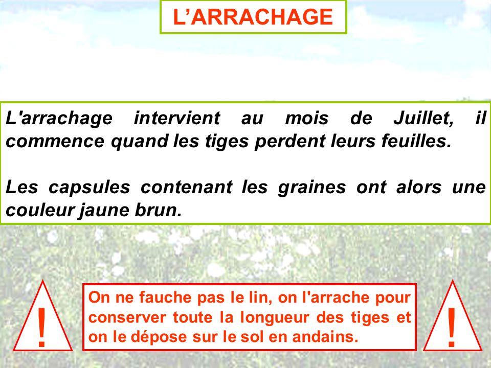 LARRACHAGE L'arrachage intervient au mois de Juillet, il commence quand les tiges perdent leurs feuilles. Les capsules contenant les graines ont alors