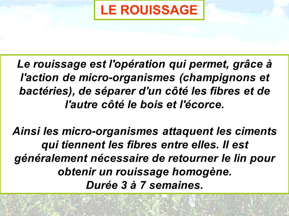 LE ROUISSAGE Le rouissage est l'opération qui permet, grâce à l'action de micro-organismes (champignons et bactéries), de séparer d'un côté les fibres
