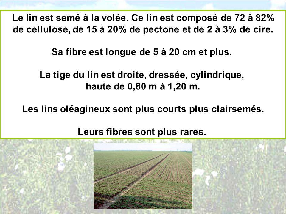 Le lin est semé à la volée. Ce lin est composé de 72 à 82% de cellulose, de 15 à 20% de pectone et de 2 à 3% de cire. Sa fibre est longue de 5 à 20 cm
