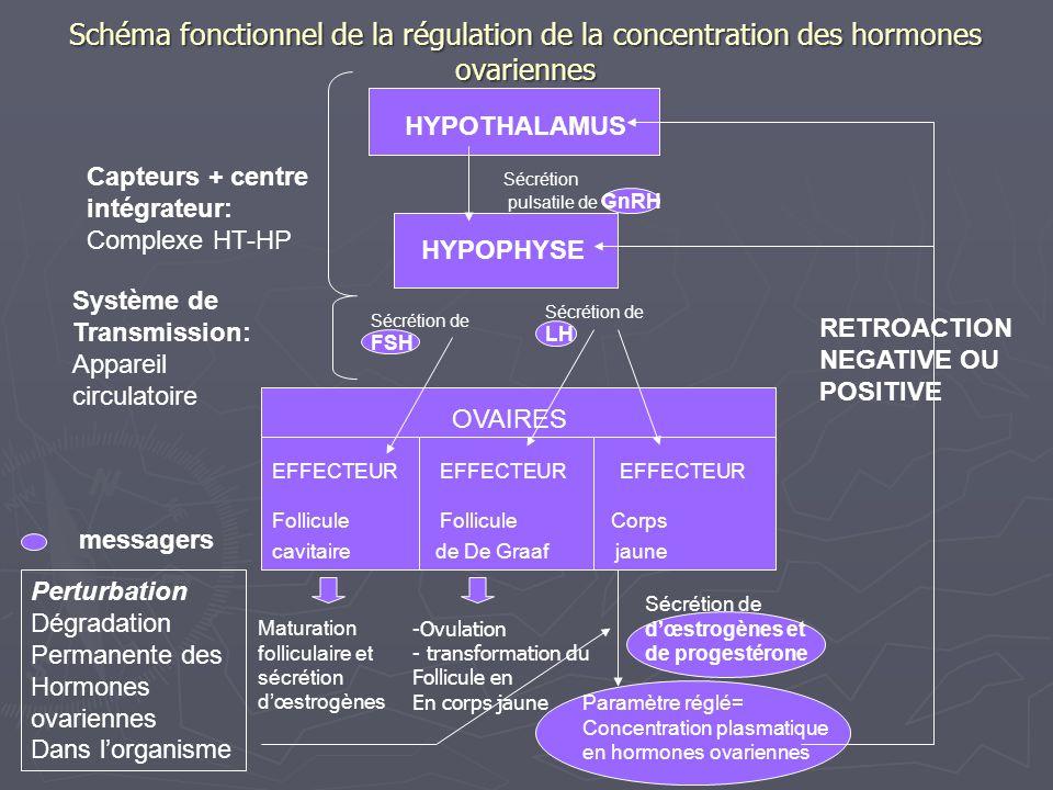 Originalité de ce système de régulation par rapport à celui de la testostéronémie Les variations des paramètres régulés sont quantitativement importantes et cycliques; Les variations des paramètres régulés sont quantitativement importantes et cycliques; Il y a synchronisation des sécrétions cycliques hypophysaires et des sécrétions cycliques ovariennes: Il y a synchronisation des sécrétions cycliques hypophysaires et des sécrétions cycliques ovariennes: en fin de phase folliculaire, la sécrétion dœstradiol par le follicule cavitaire mûr est devenue suffisante pour déclencher par rétroaction positive le pic de LH; en fin de phase folliculaire, la sécrétion dœstradiol par le follicule cavitaire mûr est devenue suffisante pour déclencher par rétroaction positive le pic de LH; Le pic de sécrétion de LH est déclencheur de lovulation, et nécessaire à la mise en place du corps jaune, ce qui permet la sécrétion de progestérone durant la 2 ème phase du cycle; Le pic de sécrétion de LH est déclencheur de lovulation, et nécessaire à la mise en place du corps jaune, ce qui permet la sécrétion de progestérone durant la 2 ème phase du cycle; En fin de cycle, la chute de la concentration de progestérone et dœstrogènes diminue les rétroactions négatives ce qui entraîne la reprise des sécrétions hypophysaires et le redémarrage du cycle.