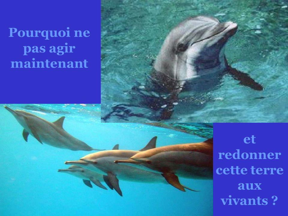 Pourquoi ne pas remettre aux dauphins leur monde marin ?