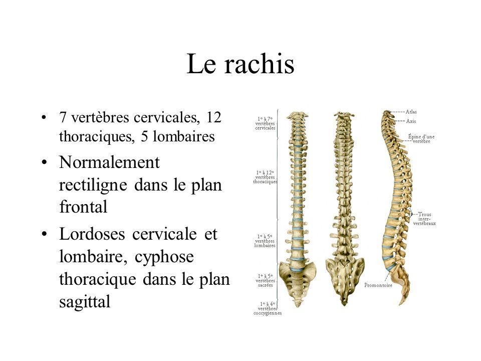 Le rachis 7 vertèbres cervicales, 12 thoraciques, 5 lombaires Normalement rectiligne dans le plan frontal Lordoses cervicale et lombaire, cyphose thor