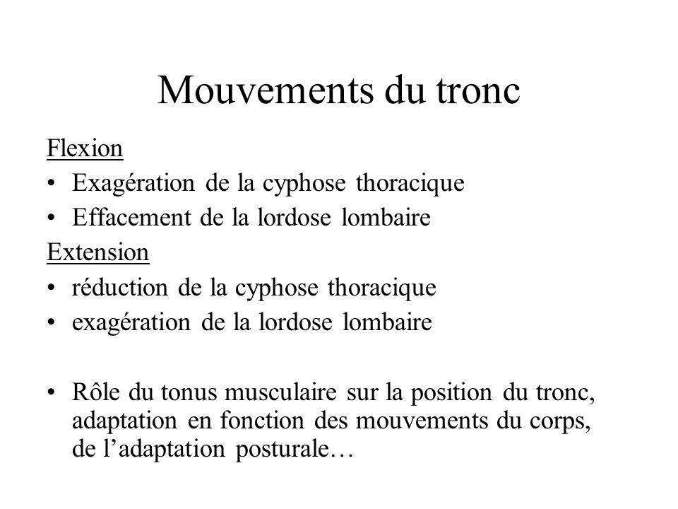 Mouvements du tronc Flexion Exagération de la cyphose thoracique Effacement de la lordose lombaire Extension réduction de la cyphose thoracique exagér