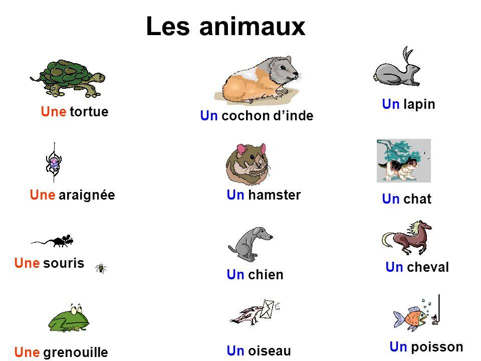Les animaux Une tortue Une araignée Une souris Une grenouille Un cochon dinde Un hamster Un chien Un oiseau Un lapin Un chat Un cheval Un poisson