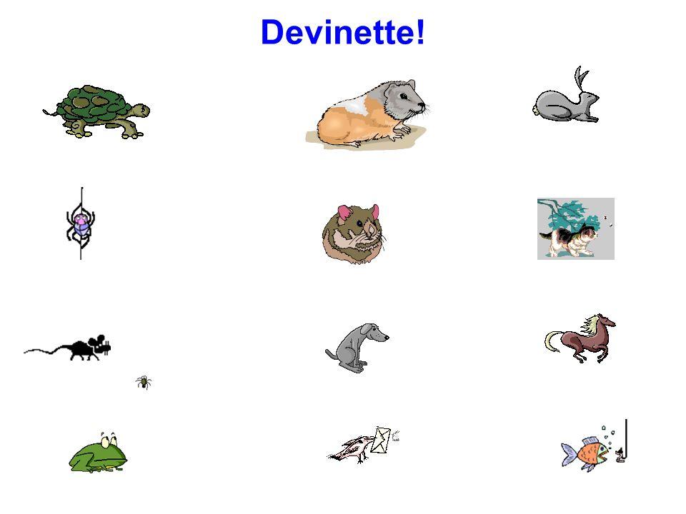 Vocabulaire une tortue une araignée une souris une grenouille un cochon dinde un hamster un lapin un chat un chien un cheval un oiseau un poisson a to