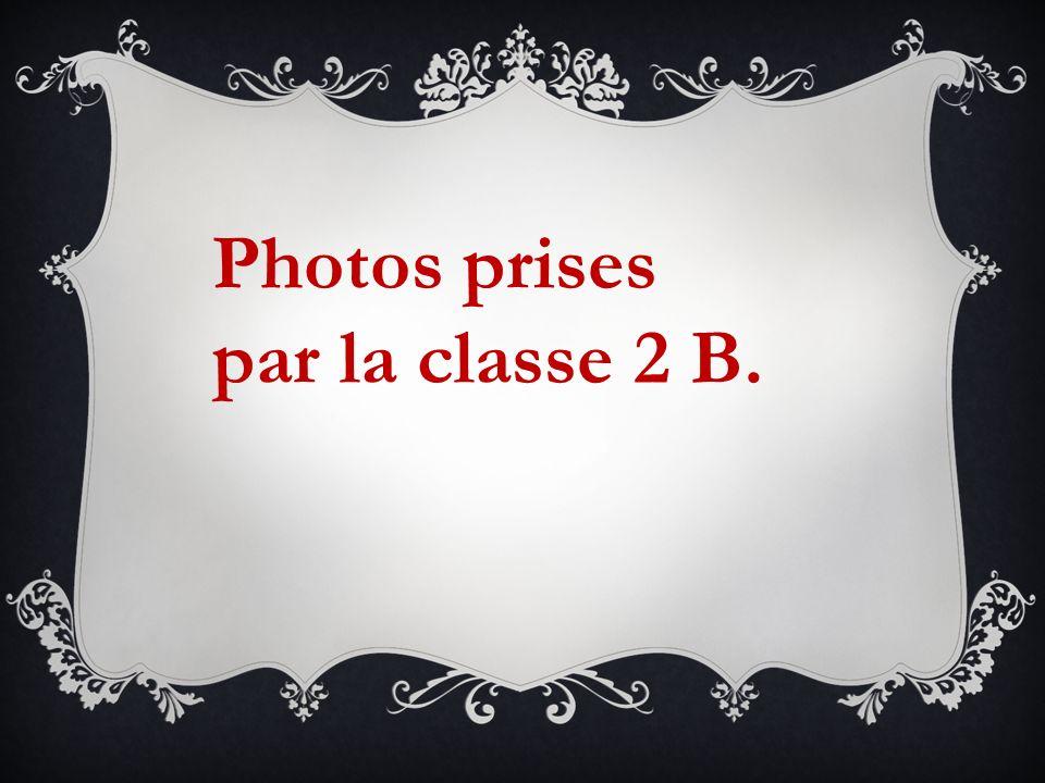 Photos prises par la classe 2 B.