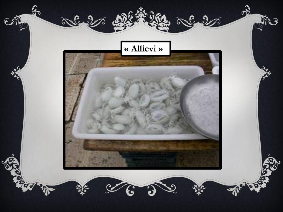 « Allievi »