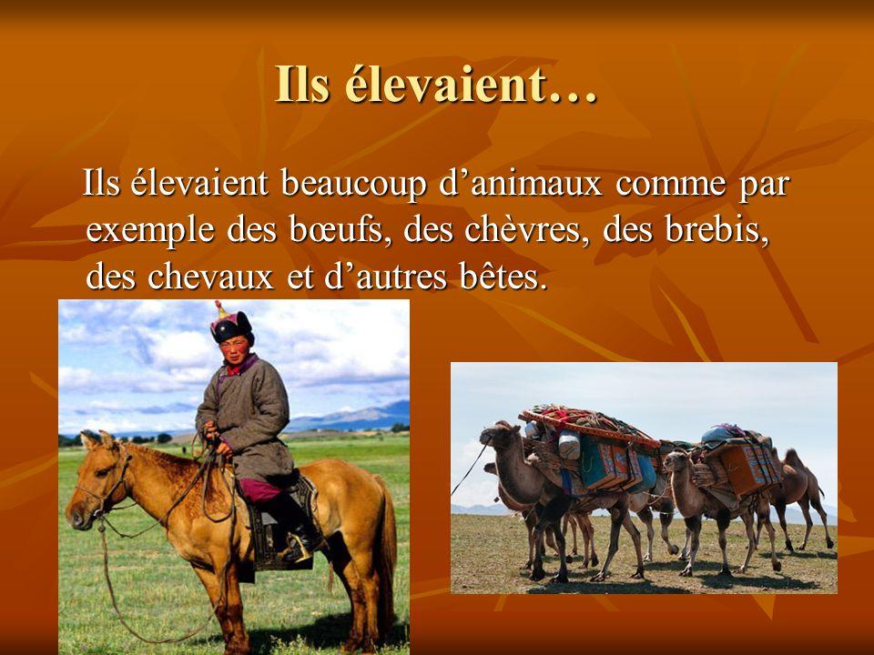 Ils élevaient… Ils élevaient beaucoup danimaux comme par exemple des bœufs, des chèvres, des brebis, des chevaux et dautres bêtes. Ils élevaient beauc
