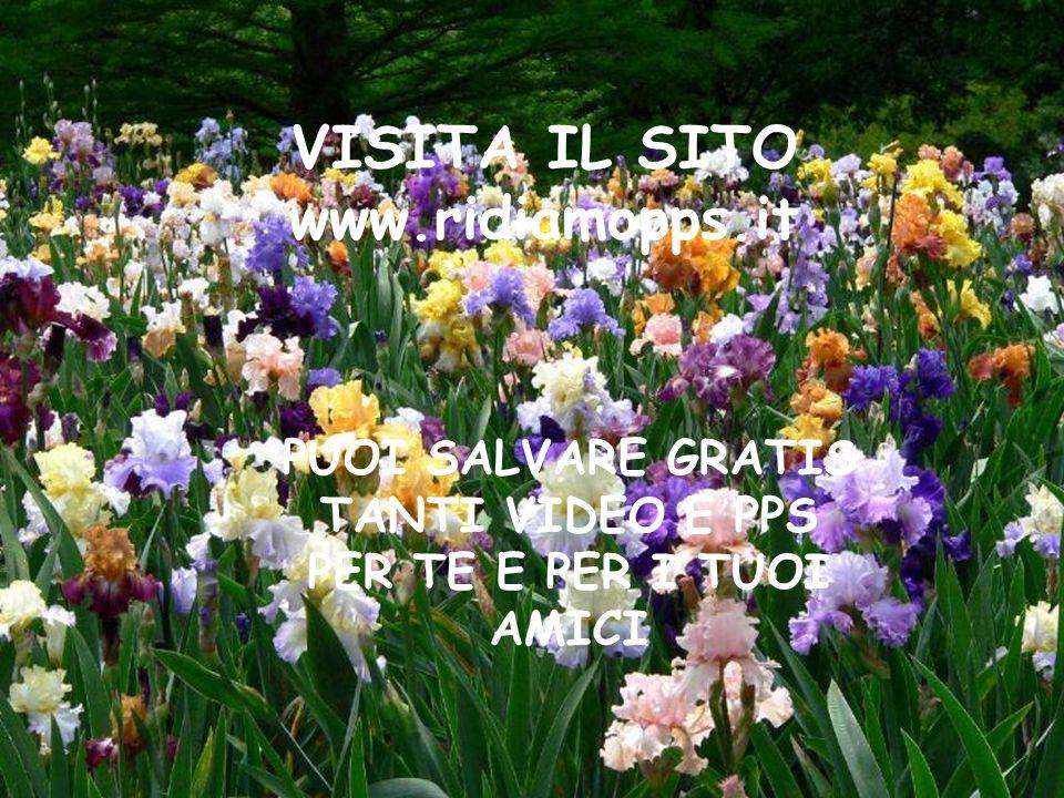 Dieu réunit ceux qui s'aiment Dio riunisce quelli che si amano