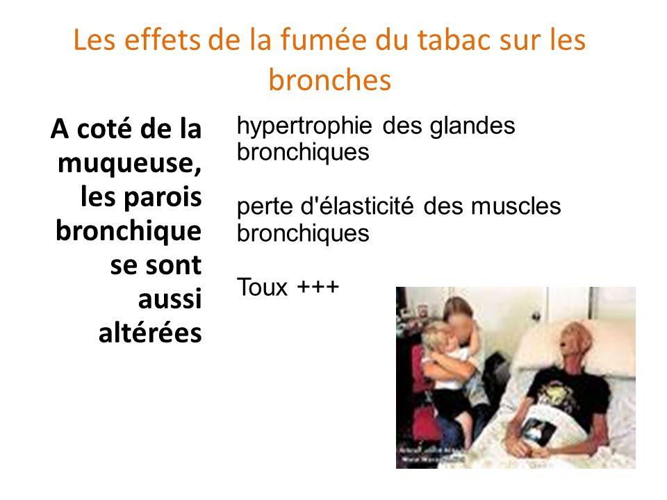 Les effets de la fumée du tabac sur les bronches A coté de la muqueuse, les parois bronchique se sont aussi altérées hypertrophie des glandes bronchiques perte d élasticité des muscles bronchiques Toux +++