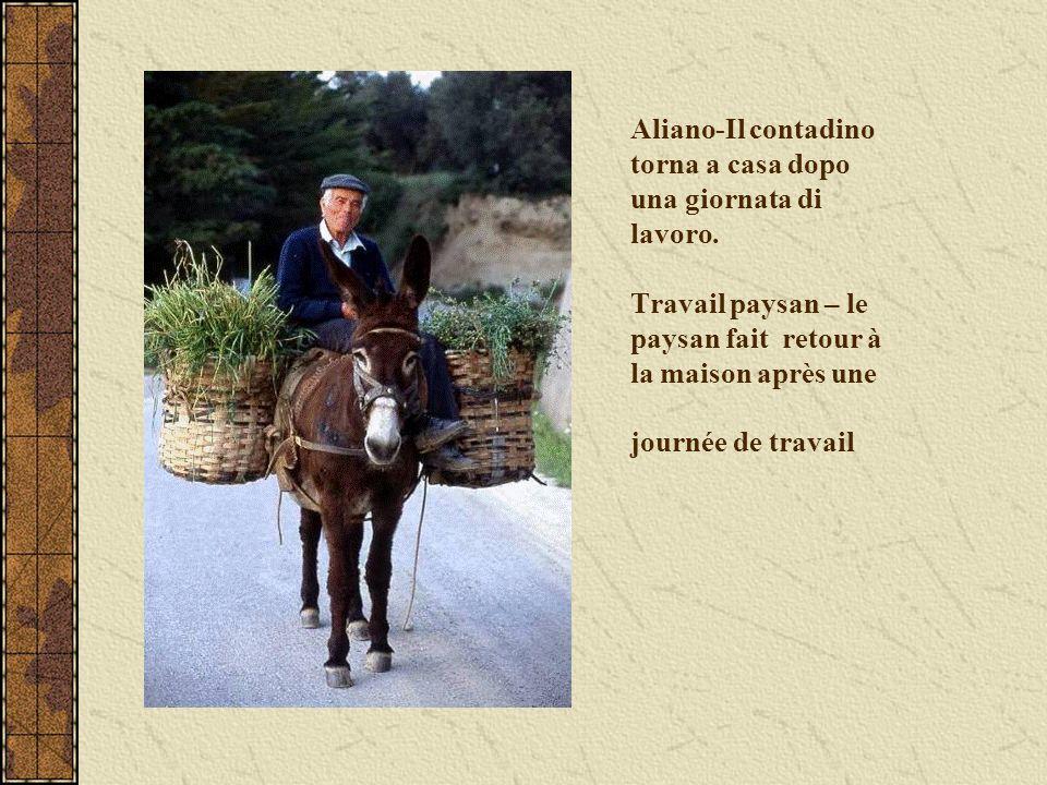 Aliano-Il contadino torna a casa dopo una giornata di lavoro. Travail paysan – le paysan fait retour à la maison après une journée de travail