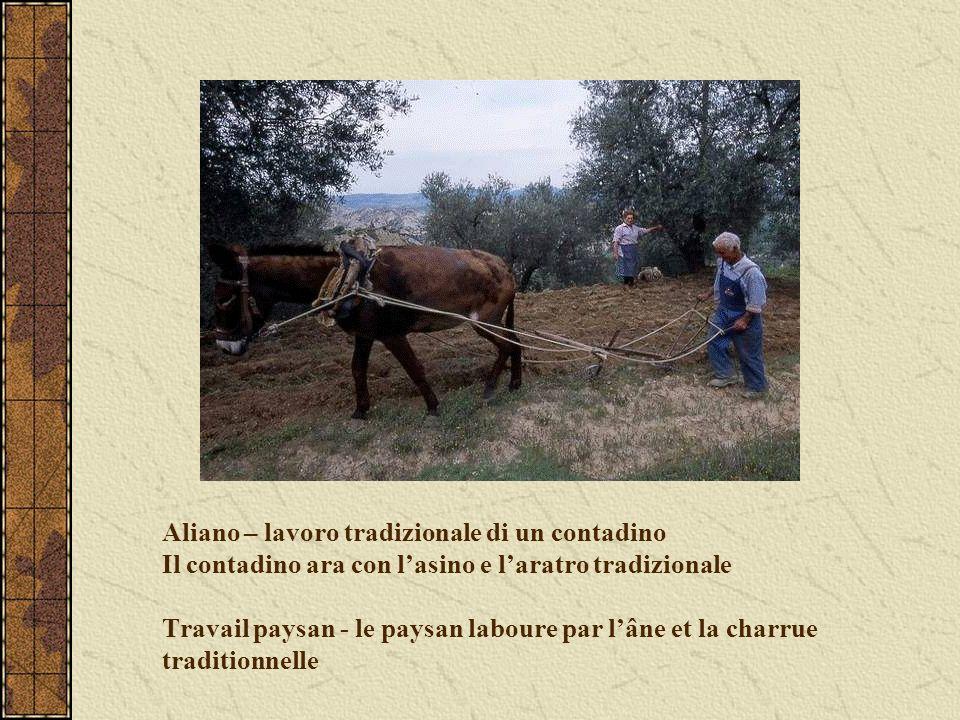 Aliano – lavoro tradizionale di un contadino Il contadino ara con lasino e laratro tradizionale Travail paysan - le paysan laboure par lâne et la char