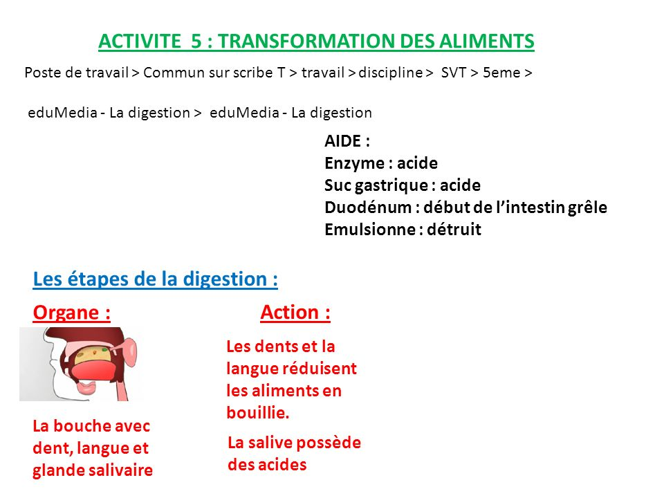 ACTIVITE 5 : TRANSFORMATION DES ALIMENTS Poste de travail > Commun sur scribe T > travail > discipline > SVT > 5eme > eduMedia - La digestion > eduMedia - La digestion Les étapes de la digestion : Organe : Action : Les dents et la langue réduisent les aliments en bouillie.