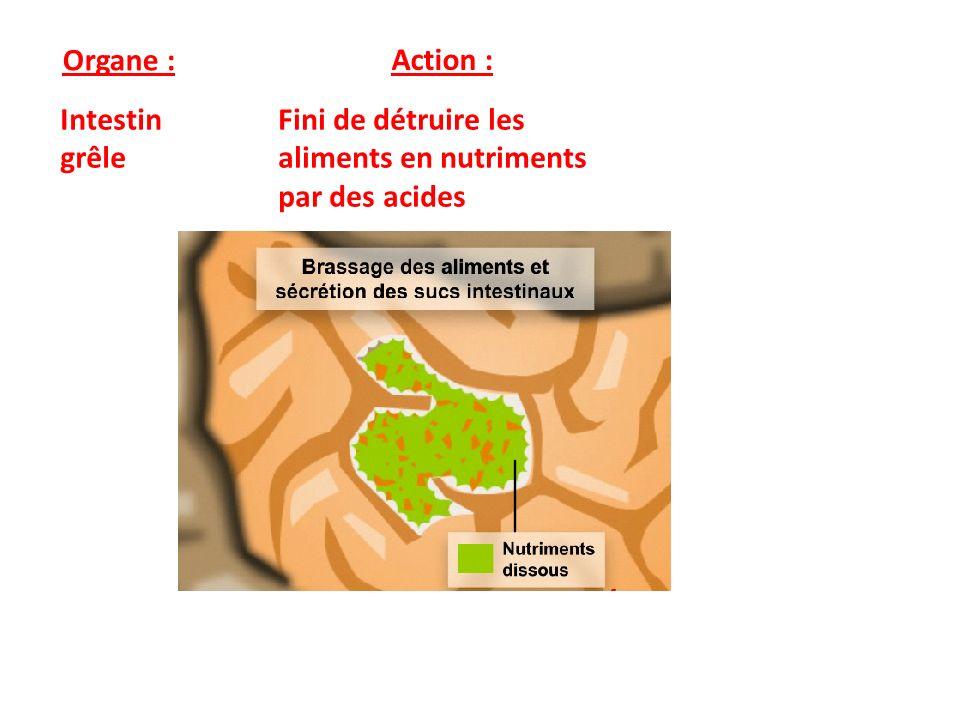 Organe : Action : Intestin grêle Fini de détruire les aliments en nutriments par des acides