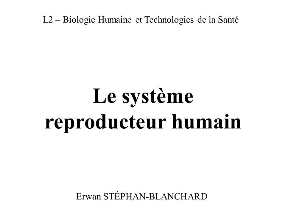 Le système reproducteur humain Erwan STÉPHAN-BLANCHARD L2 – Biologie Humaine et Technologies de la Santé