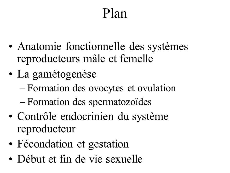 Anatomie fonctionnelle des systèmes reproducteurs mâle et femelle La gamétogenèse –Formation des ovocytes et ovulation –Formation des spermatozoïdes C