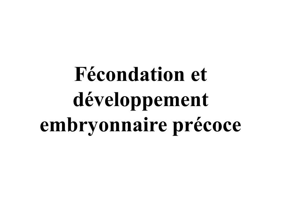 Fécondation et développement embryonnaire précoce