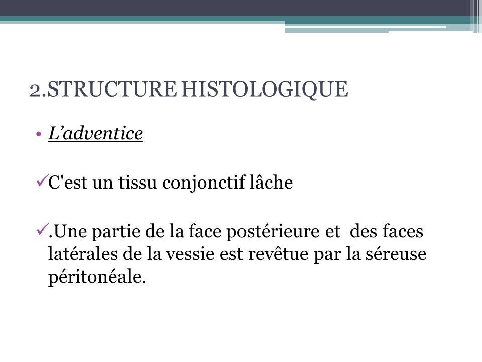 2.3 Le segment sous vésical :  Urètre : présente 3 portions distinctes  L'uretre prostatique chemine dans l épaisseur de la prostate et mesure environ 3 cm.