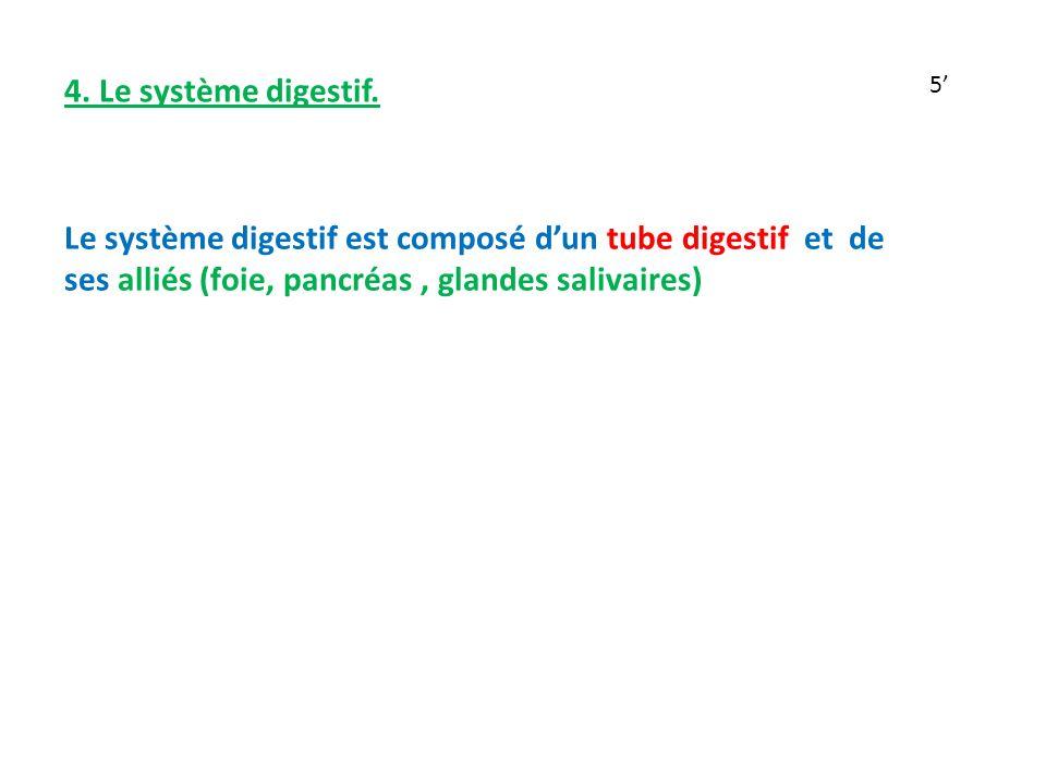 4.Le système digestif.
