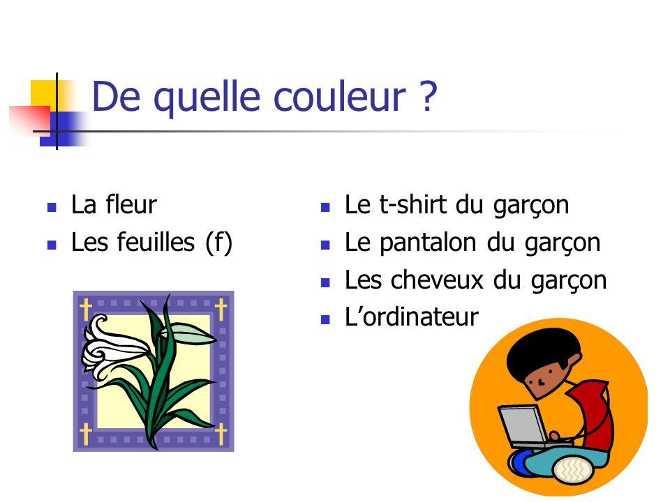 De quelle couleur ? La fleur Les feuilles (f) Le t-shirt du garçon Le pantalon du garçon Les cheveux du garçon L'ordinateur