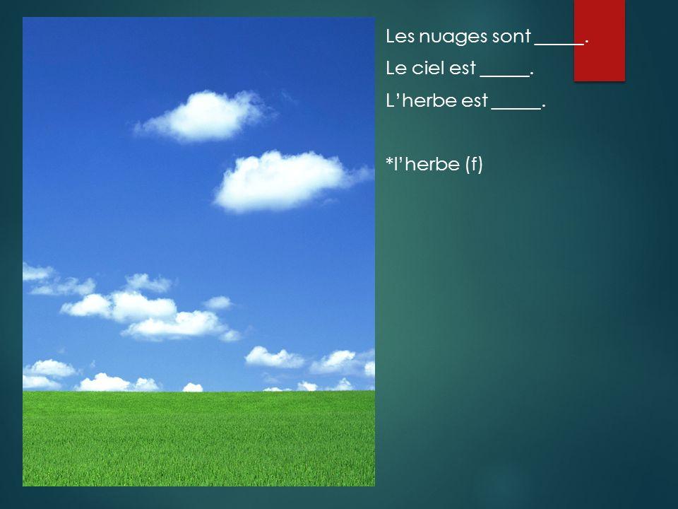 Les nuages sont _____. Le ciel est _____. L'herbe est _____. *l'herbe (f)