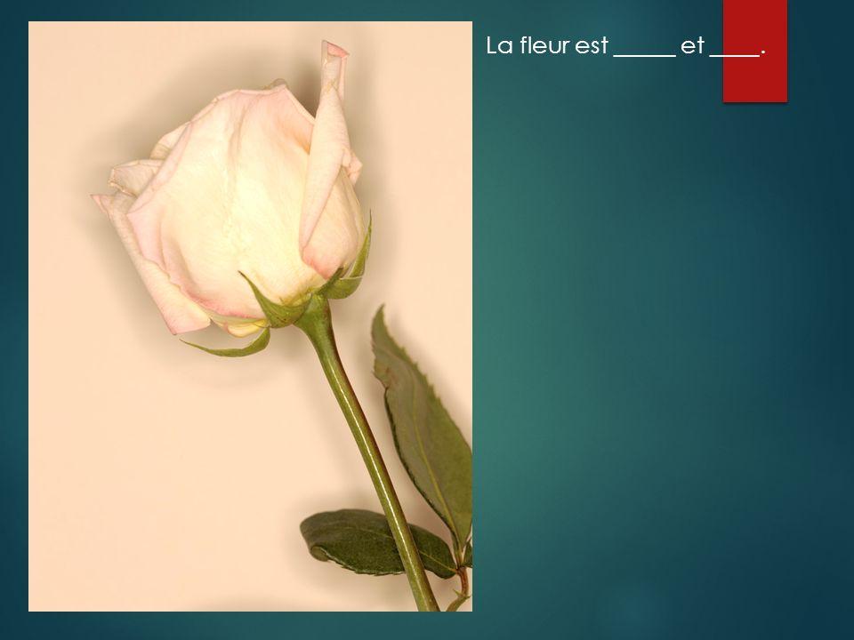 La fleur est _____ et ____.