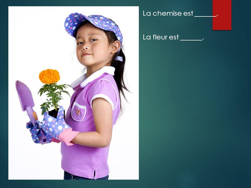 La chemise est ______. La fleur est ______.