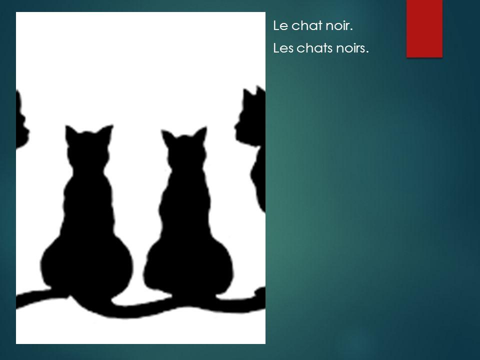 Le chat noir. Les chats noirs.