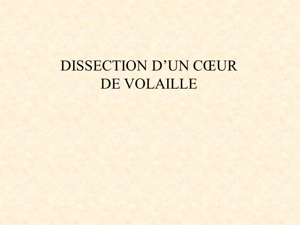 DISSECTION D'UN CŒUR DE VOLAILLE