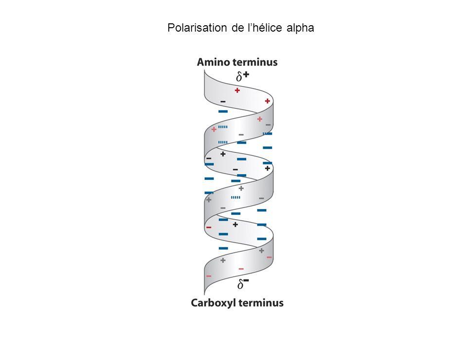 Polarisation de l'hélice alpha