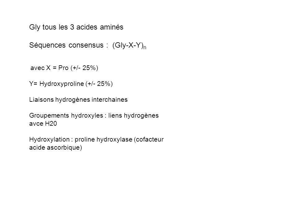 Gly tous les 3 acides aminés Séquences consensus : (Gly-X-Y) n avec X = Pro (+/- 25%) Y= Hydroxyproline (+/- 25%) Liaisons hydrogènes interchaines Groupements hydroxyles : liens hydrogènes avce H20 Hydroxylation : proline hydroxylase (cofacteur acide ascorbique)
