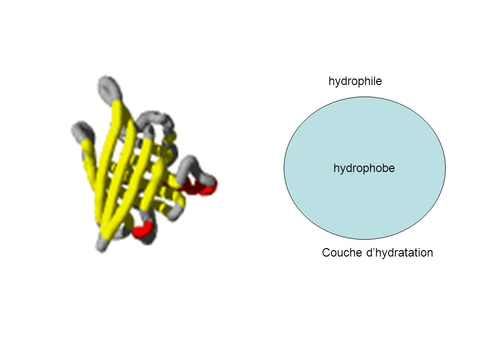 hydrophobe hydrophile Couche d'hydratation